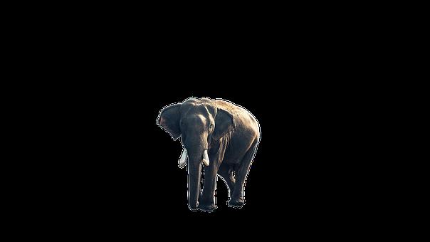 Elephant, Animal, Nature, Wildlife, Zoo, Wild, Design