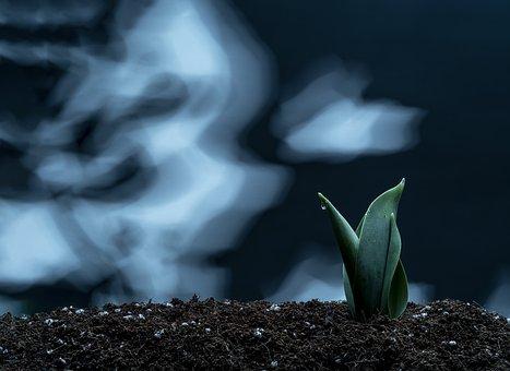 Nature, Spring, Bud, Flower, Plant, Garden, Tulip, Grow