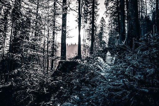 Tree, Nature, Landscape, Fall, Sky