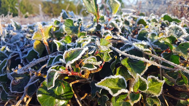 Plant, Leaf, Frost, Nature, Leaves, Garden, Texture