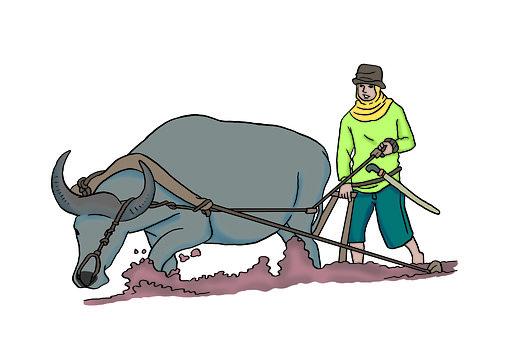 Farming, Farmer, Plow, Farm, Agriculture