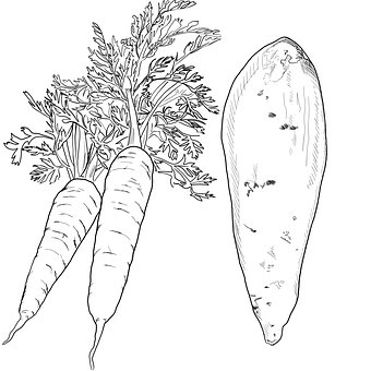 Carrot, Yam, Line Drawing Art, Produce, Vegetables