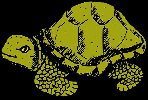 Tortoise, Green, Wildlife, Hard, Tough, Shell, Turtle