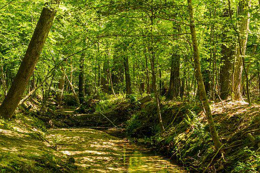 Creek Trail, Stream, Preserve, Nature Preserve, Durant