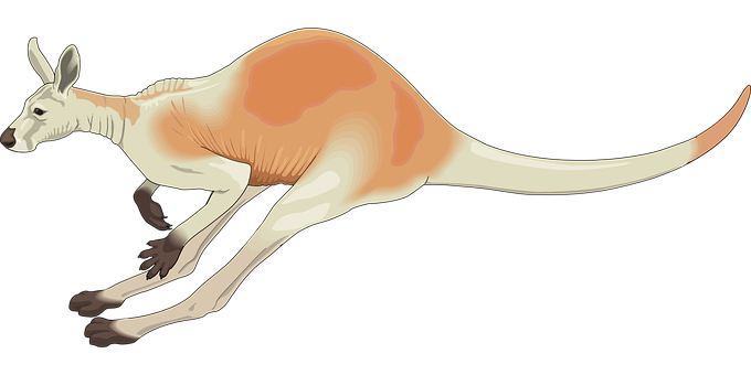 Kangaroo, Red, Australia, White, Pouch, Long, Jumping
