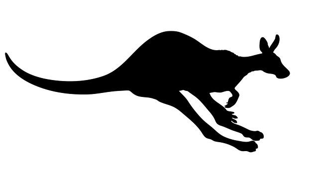 Kangaroo, Animal, Marsupial, Wildlife, Wild, Mammal