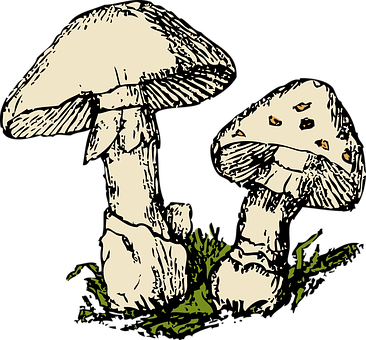Mushrooms, Two, Beige, Plant, Fungus
