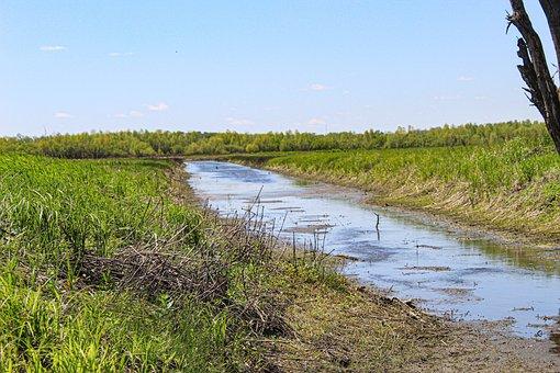 Shallow Creek, Creek, Nature, Landscape, Water, Sky