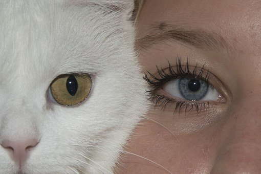 Eyes, Cat, Face, Girl, Human, Cats, Pet, Funny