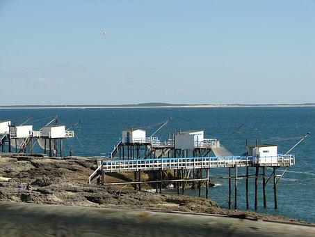 Plaice, Sea, Net, Fishing