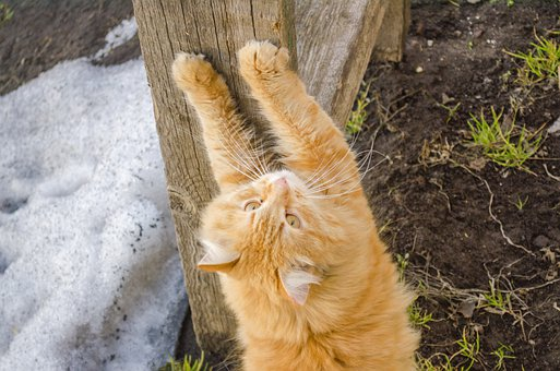 Sharpening Claws, Cat, Kitten, Feline, Kitty, Furry