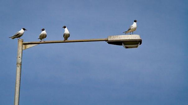 Gossip, Gull, Seagull, Discussion, Argument, Nature