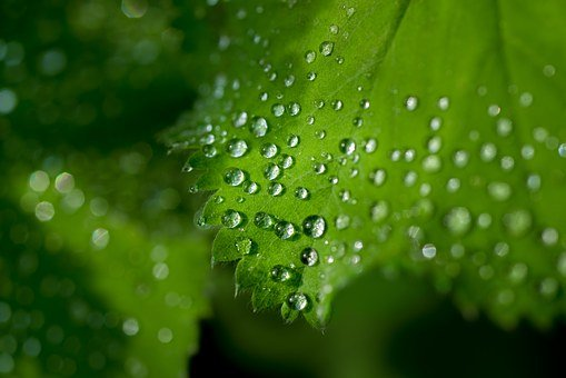 Water, Drops, Leaf, Fresh, Water Drop, Wet, Macro