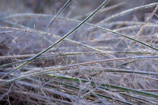 Grass, Frost, Ground Frost, Meadow, Winter, Frosty