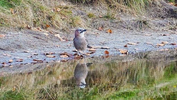 Matthias Bird, Lake, Leaves, Beast, Bird, Green