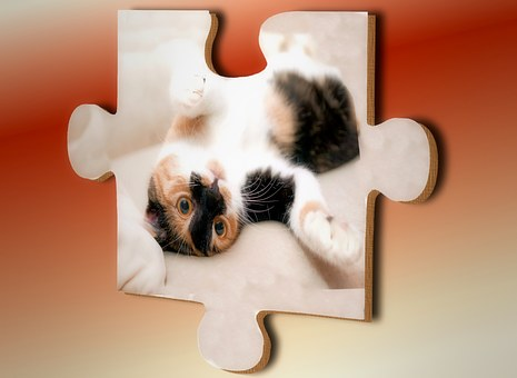 Puzzle, Cat, Share, Match, Piecing Together, Play