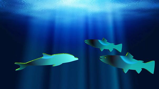 Fishes, Dolphin, Aquatic, Fish, Water, Ocean, Blue