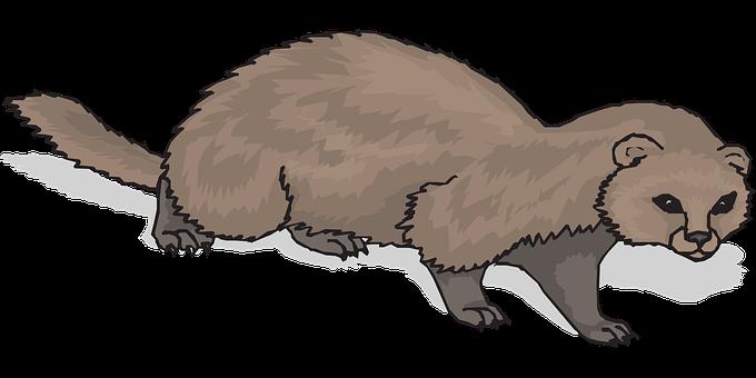 Ferret, Animal, Mammal, Domestic
