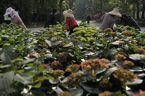 Flower, Park, Gardener, Flower Grower, Work, Work Hard