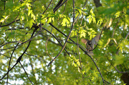 Birds, Trees, Green, Forest, Brochure, Background