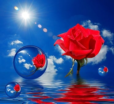 Red Rose, Bubbles, Clouds, Blue, Sky, Water, Reflection