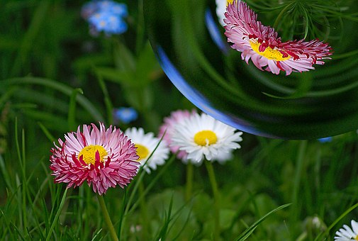 Reflection, Bubble, Sphere, Distortion, Flowers, Daisy