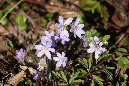 Flowers, Violet, Bloom, Purple, Plant, Garden, Nature