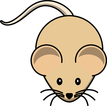 Gerbil, Mouse, Rodent, Brown, Animal