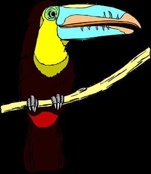 Toucan, Bird, Wildlife, Big, Beak, Large