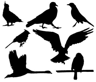 Bird, Birds, Animal, Wildlife, Pigeon, Cockatoo, Eagle