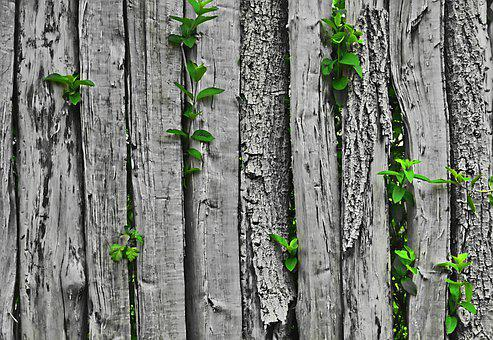 Color Key, Fence, Leaves, Grey, Green