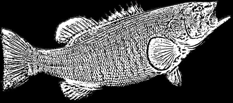 Bass Fish, Game Fishing, Fishing, Sport, Trophy