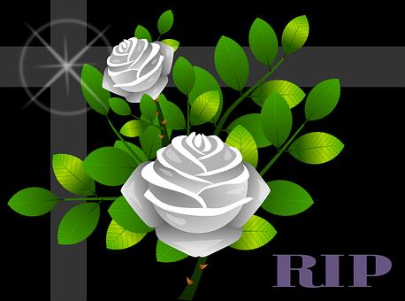 Roses, Flowers, Floral, Flowery, Plants, Tenderness