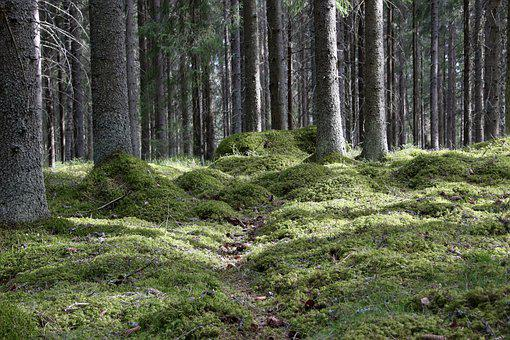 Forest, Six, Forestry, Moss, The Path, Wood, Spring