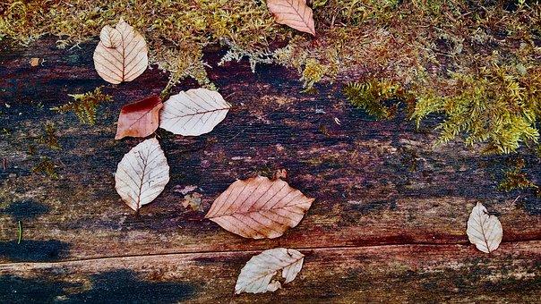 Log, Leaves, Forest, Nature, Wood, Autumn, Mood