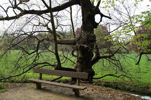 Bench, Park, Seating, Sit, Outdoors, Tree, Old, Shadow
