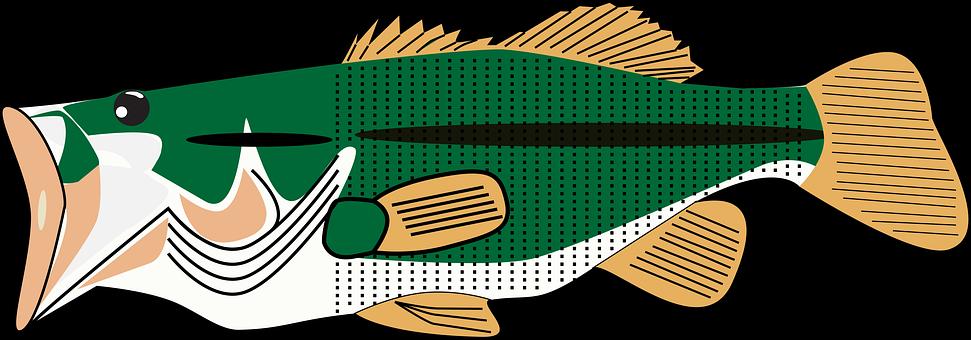Due Diligence Bass, Bass, Base, Fish