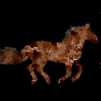 Horse, Animal, Brown Horse, Nature, Mammal, White, Mane