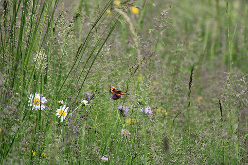 Butterfly, Red, Prairie, Flowers, Nature, Landscape