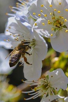 Spring, Bee, Macro, Pollen, Nature
