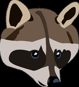 Raccoon, Animal, Wild Animal, Raccoon Strip