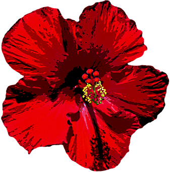 Hibiscus, Blossom, Bloom, Flower, Red, Mallow