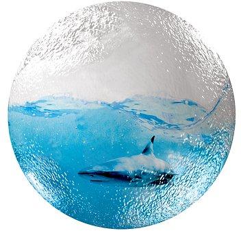 Glass Ball, Water, Hai, Sea, Image Editing