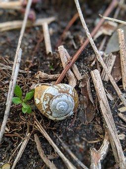 Snail, Ground, Dirt, Sticks, Brown, Natural, Nature