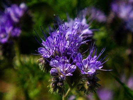 Flower, Plant, Meadow, Purple, Long, Sticks, Flora