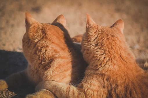 Cats, Friends, Friendship, Love