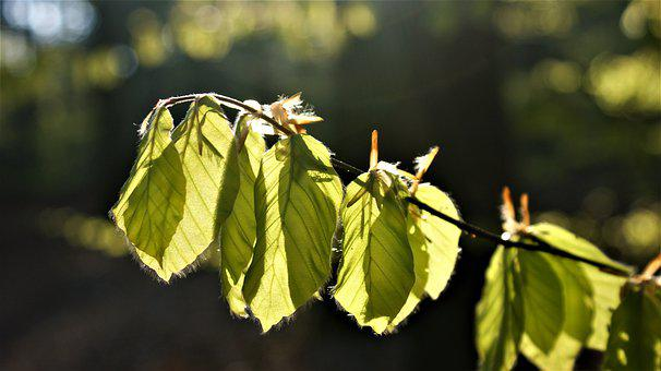 Leaves, Spring, Morning, Forest, Hiking, Light, Nature