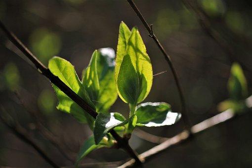 Spring, Show, Branch, Backlighting, Transparency, Light