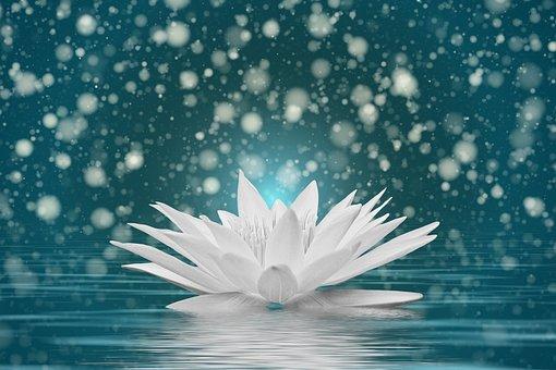 Bokeh, Water Lily, Water, Wellness
