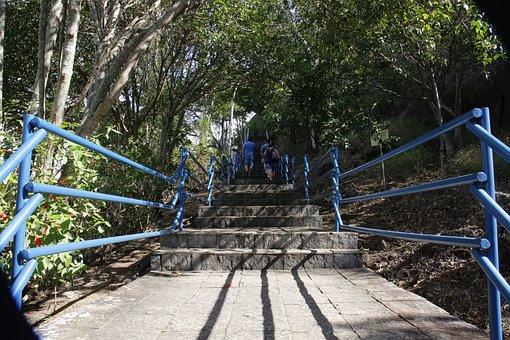 Way, Staircase, Stairway, Handrail, Nature